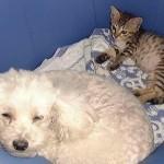 Lissy und Snoopy